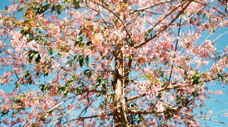 Thailand / Mae Hong Son 前編
