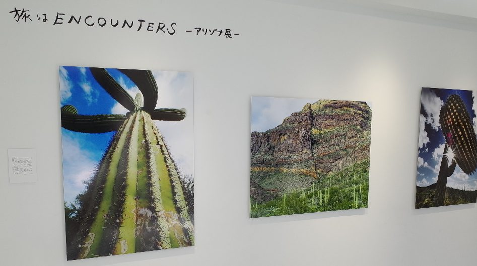CACTUS NIGHT EXHIBITION